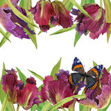 Fondo del tulipán de la acuarela Fotos de archivo libres de regalías