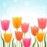 Fondo del tulipán Fotografía de archivo