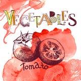 Fondo del vector con el tomate Fotografía de archivo