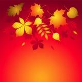 Fondo del vector con las hojas de otoño. Imagen de archivo libre de regalías