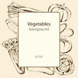 Fondo del vector con las verduras dibujadas mano Imágenes de archivo libres de regalías