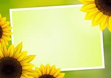 Fondo del vector del girasol con el marco Foto de archivo libre de regalías