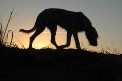 Fondo del vector del perro silhouette Imagenes de archivo