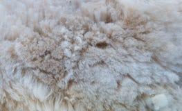 Fondo del vello dell'alpaga Fotografia Stock