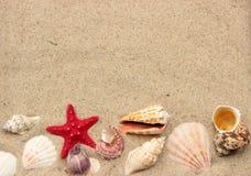 Fondo del verano Fotografía de archivo libre de regalías