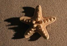 Fondo del verano Accesorios del verano, concepto del verano Estrellas de mar con la arena como fondo Foto de archivo libre de regalías