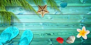Fondo del verano con chancletas de las palmeras y cáscaras del mar Imagen de archivo