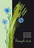 Fondo del verano con corn-flowers Imagenes de archivo