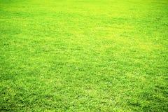 Fondo del verano de la hierba verde Imagenes de archivo