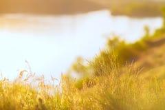 Fondo del verano - la hierba enorme es anaranjada en los rayos del adoquín Fotografía de archivo libre de regalías