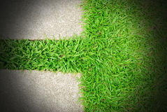 Fondo del verde de hierba Fotos de archivo