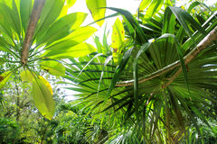 Fondo del verde de la atmósfera de la selva tropical de la selva Fotos de archivo libres de regalías