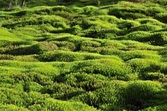 Fondo del verde de musgo. Fotografía de archivo