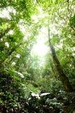 Fondo del verde del otoño del árbol forestal Fotos de archivo libres de regalías