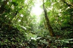 Fondo del verde del otoño del árbol forestal Fotografía de archivo libre de regalías