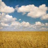 Fondo del vintage con el campo de trigo y cielo nublado en el backgr Imagen de archivo