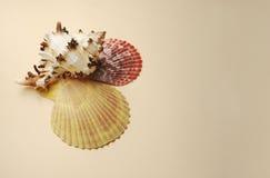 Fondo del vintage con las conchas marinas imagen de archivo