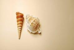 Fondo del vintage con las conchas marinas imagenes de archivo