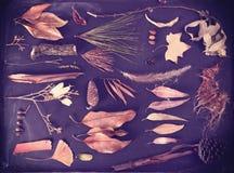 Fondo del vintage de la pizarra del otoño de los elementos de la caída Fotos de archivo