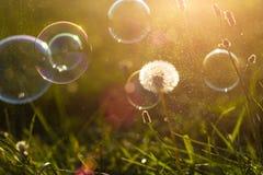 Fondo del vintage de las burbujas de jabón Imágenes de archivo libres de regalías