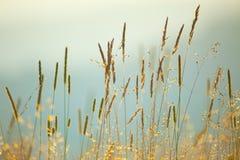 Fondo del vintage de las hierbas macras del prado fotos de archivo