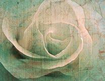 Fondo del vintage de Rose foto de archivo libre de regalías