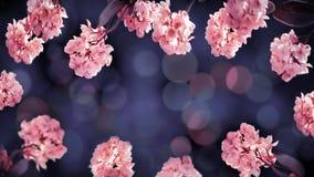 Fondo delicato di estate floreale Belle inflorescenze dei fiori rosa delicati su un fondo porpora Macro artistica i di estate fotografia stock libera da diritti