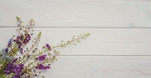 Fondo delicato di estate per la decorazione delle carte Wildflowers e legno Fotografie Stock Libere da Diritti