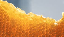 Fondo delicioso del panal de oro con el swe pegajoso que fluye imágenes de archivo libres de regalías