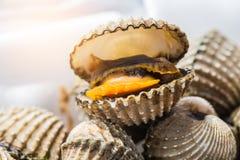 Fondo delizioso o menu bollito o cotto a vapore dell'alimento dei frutti di mare del cocklesScallop Immagine Stock