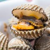 Fondo delizioso o menu bollito o cotto a vapore dell'alimento dei frutti di mare del cocklesScallop Immagini Stock