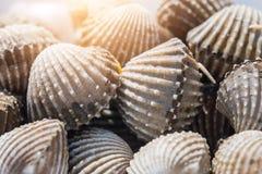 Fondo delizioso o menu bollito o cotto a vapore dell'alimento dei frutti di mare del cocklesScallop Fotografia Stock Libera da Diritti