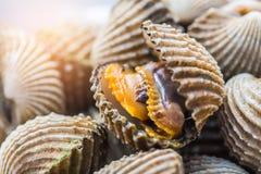 Fondo delizioso o menu bollito o cotto a vapore dell'alimento dei frutti di mare del cocklesScallop Immagine Stock Libera da Diritti