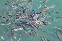 Fondo dell'acqua blu del mare fotografia stock libera da diritti