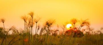 Fondo dell'Africa fotografie stock libere da diritti
