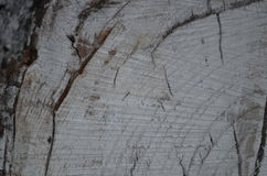 Fondo dell'albero del ceppo Fotografia Stock Libera da Diritti