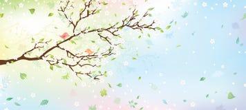 Fondo dell'albero della primavera Immagini Stock