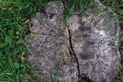 Fondo dell'albero tronco del cerchio Fotografie Stock