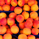 Fondo dell'albicocca - frutti organici freschi della ciliegia Componenti della pagina Fotografie Stock