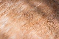 Fondo dell'anello di albero Immagine Stock Libera da Diritti