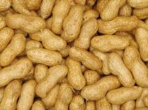 Fondo dell'arachide Fotografia Stock Libera da Diritti
