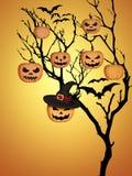 Fondo dell'arancia dei pipistrelli delle zucche di Halloween dell'albero Fotografia Stock Libera da Diritti