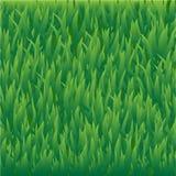 Fondo dell'erba Immagine Stock