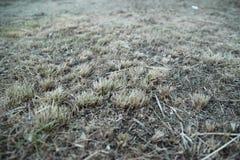 Fondo dell'erba asciutta Fotografia Stock Libera da Diritti