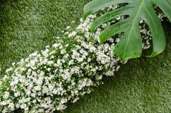 Fondo dell'erba con il fiore Immagine Stock