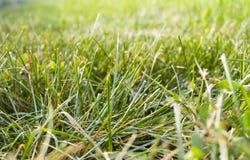 fondo dell'erba con la prospettiva natura, struttura fotografia stock libera da diritti