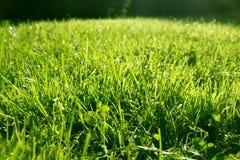 Fondo dell'erba con le gocce Fotografia Stock Libera da Diritti
