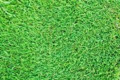 Fondo dell'erba del tappeto erboso Fotografia Stock