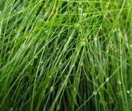 Fondo dell'erba della foresta con una rugiada di mattina fotografie stock libere da diritti