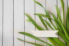 Fondo dell'erba della primavera Erba sopra legno Fondo della natura con erba e legno Fotografie Stock Libere da Diritti
